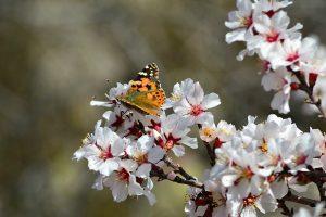 Турция весной покрывается зеленью и цветами